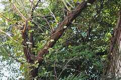 緑がワサワサ。(2012-10-05,共用部,OTHER,1F)