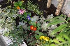 玄関脇の花壇の様子。(2011-12-08,共用部,OTHER,1F)