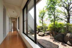 廊下の様子。左手にはリビング、右手の庭園には緑も。(2011-07-04,共用部,OTHER,5F)