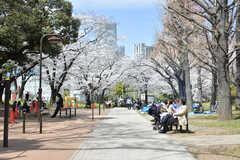 芝公園は春になると満開の桜を見ることができます。(2019-04-05,共用部,ENVIRONMENT,1F)