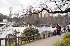 井の頭公園の様子2。湖ではボートに乗ることができます。(2017-02-26,共用部,ENVIRONMENT,1F)