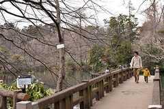 井の頭公園の様子5。(2017-02-26,共用部,ENVIRONMENT,1F)