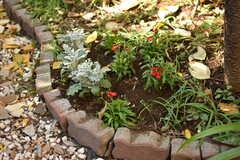 入居者は庭に好みの植物を植えることができるそうです。(2018-12-14,共用部,GARAGE,1F)