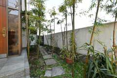 玄関脇で竹が育っています。(2017-03-08,周辺環境,ENTRANCE,1F)