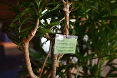 ラウンジに設置されている植物の名前が分かるよう、名札が付けられています。(2019-07-30,共用部,LIVINGROOM,1F)