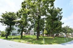 森の広場の様子。(2019-07-30,共用部,OTHER,1F)