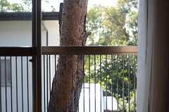 窓の外に見える松。(202号室)(2011-10-27,共用部,OUTLOOK,2F)