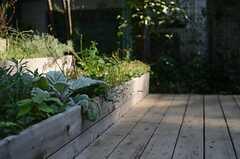 野菜も育っています。(2011-10-27,共用部,OTHER,1F)