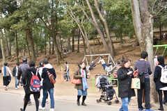 井の頭公園の様子4。(2017-02-26,共用部,ENVIRONMENT,1F)
