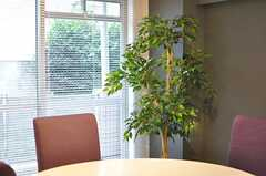 ダイニングには造花の観葉植物がおかれています。(2014-09-17,共用部,LIVINGROOM,1F)