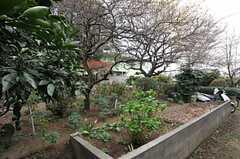 庭の様子。(2013-03-29,共用部,OTHER,1F)