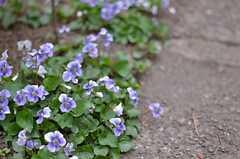 玄関のアプローチには植物がたくさん。(2013-03-29,共用部,OTHER,1F)
