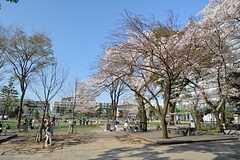 中野駅からシェアハウスへはセントラルパークを抜けると近道です。(2015-04-03,共用部,ENVIRONMENT,1F)