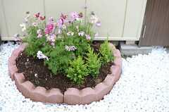 玄関までのアプローチにはコスモスの花壇が設けられています。(2013-10-23,共用部,OTHER,1F)