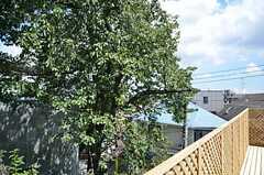 区の保護樹の桜が、間近に迫ります。春の花見が待ち遠しい。(2012-09-10,共用部,OTHER,3F)