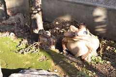 カエルの親子。日に当たって眩しそう。(2013-01-07,周辺環境,ENTRANCE,1F)