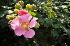手が届くところにも花。(2009-10-16,共用部,OTHER,2F)