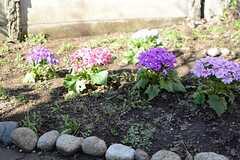 庭には花壇が設けられています。(2016-03-15,共用部,OTHER,1F)