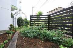 ハーブガーデンの様子。野菜やハーブを育てるクラブを発足される予定だそう。(2011-07-26,共用部,OTHER,1F)