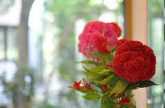 玄関には丸い花が飾られていました。(2013-09-02,周辺環境,ENTRANCE,1F)