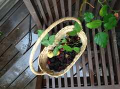 庭で収穫した桑の実とブラックベリー。 ※事業者様提供素材(2013-09-09,共用部,OTHER,1F)