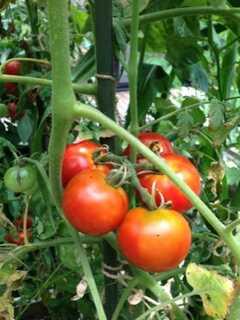 庭の畑には様々な野菜がたわわに実っています。 ※事業者様提供素材(2013-09-09,共用部,OTHER,1F)