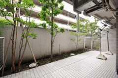 庭の様子。(2009-05-19,共用部,LIVINGROOM,1F)