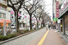 西武池袋線・桜台駅前の桜並木。(2017-03-15,共用部,ENVIRONMENT,1F)