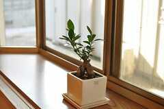 ダイニングの出窓には元気なガジュマル。(2013-06-04,共用部,LIVINGROOM,1F)