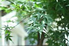 木々が元気よく育っています。  (2011-06-28,共用部,OTHER,1F)
