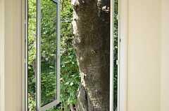 西向きの窓を開けると、目の前に力強い幹。(104号室)(2012-09-12,専有部,ROOM,1F)