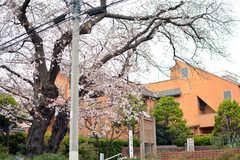 春になると、目の前の公園に桜が咲きます。(2020-03-23,共用部,ENVIRONMENT,1F)