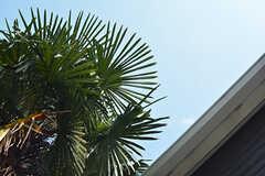 南国風の背の高い木が生えています。(2016-07-12,共用部,OTHER,1F)