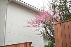 お隣さんの梅の花。(2017-02-23,共用部,OTHER,1F)