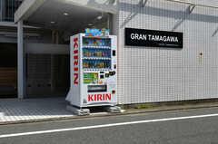 エントランス前に自動販売機が設置されています。(2019-08-07,共用部,OTHER,1F)