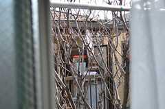 窓の外には八重桜が見えます。春が楽しみ。(206号室)(2013-02-07,専有部,ROOM,2F)