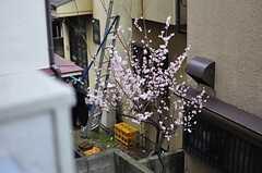 隣接している住居には、梅の木。(2012-03-28,共用部,OTHER,2F)