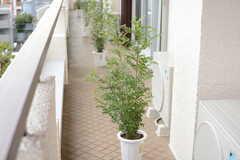 ベランダは201〜205号室まで共用で、部屋ごとの仕切り代わりに植物が置かれています。(201号室)(2017-09-15,専有部,ROOM,2F)