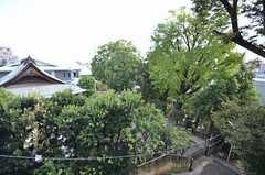 隣の敷地はお寺で、植物がいっぱい。(204号室)(2014-10-07,専有部,ROOM,2F)