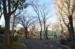シェアハウスの前にある公園の様子。(2015-01-23,共用部,ENVIRONMENT,1F)