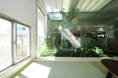 室内緑化は自動で水が補充されるそう。(2011-03-11,共用部,LIVINGROOM,1F)