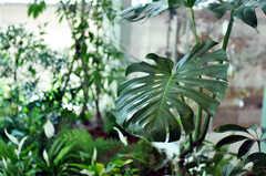 太陽の光も入り、元気に育っています。(2011-03-11,共用部,LIVINGROOM,1F)