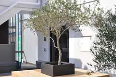 玄関前に植えられている植栽。(2014-03-28,周辺環境,ENTRANCE,2F)