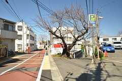 近所の桜の木。開花が楽しみです。(2016-03-17,共用部,ENVIRONMENT,1F)