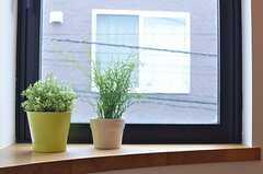踊り場の窓にはグリーン。(2013-10-29,共用部,OTHER,3F)