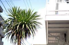 玄関脇には夏を感じさせる植物が植えられています。(2012-10-22,共用部,OUTLOOK,1F)