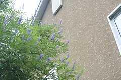 花も咲いています。(2015-07-02,共用部,OTHER,2F)