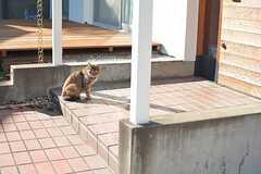 どうやらたまにネコが遊びに来るようです。(2016-02-26,共用部,OTHER,1F)