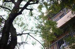背の高い木々が生い茂っています。(2013-11-07,共用部,OTHER,1F)
