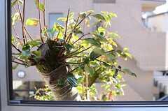 窓のすぐ外は、柿の木が繁っています。(203号室)(2013-10-16,専有部,ROOM,2F)